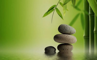 A Journey in Mindfulness Meditation