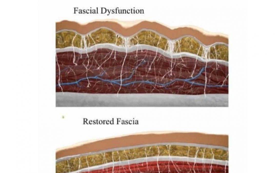 The Fascia System